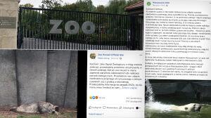 """Spór o mieszkańców warszawskiego zoo. """"Ten niedźwiedź polarny cierpi"""""""