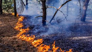 """Duże zagrożenie pożarowe. """"Należy zachować szczególną ostrożność"""""""