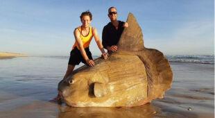 Gigantyczna ryba znaleziona w Australii